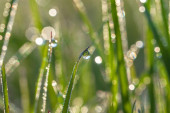 Green blur background from a grass on a  meadow — Foto Stock