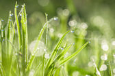 Green blur background from a grass on a field  — Stock Photo