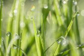 Green blur background from a grass on a  meadow — Stock Photo