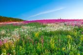 Spring  landscape with  flowers on a meadow — Stock Photo