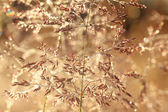 Blurred  background on a summer meadow — Stock Photo