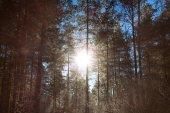 Winterlandschap met het forest en de zonsondergang — Stockfoto