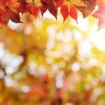 Autumn background — Stock Photo #73102425