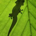 Lizard silhouette — Stock Photo #73204221