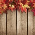 Autumn background — Stock Photo #84602050