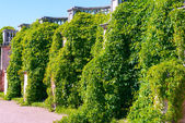 Overgrown wall in the park — ストック写真