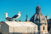 Gulls in the Roman Forum in Rome — ストック写真