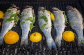Grilled organic fish — Stock Photo