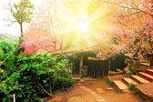 Hut in spring flower — Stock Photo