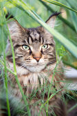 Cat sitting in the grass — Stock Photo