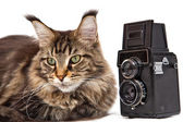 Old camera and the cat — ストック写真