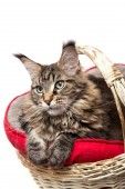 A Cat in a basket — Stock Photo