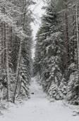 Winter snow covered trees . Viitna, Estonia. — Stock Photo