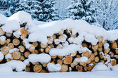 The cut logs in a winter wood under snowdrifts — Stock Photo