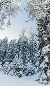 Winter snow covered trees against the blue sky. Viitna, Estonia. — Stock Photo