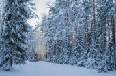 Spruce covered with snow in winter forest.  Viitna, Estonia. — Stock Photo