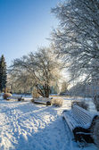 A beautiful city park with trees covered with hoarfrost — Fotografia Stock