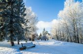 A beautiful city park with trees covered with hoarfrost — Stock Photo