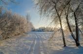 青空霜に覆われた木 — ストック写真