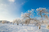Trees covered with hoarfrost against the blue sky — Stockfoto