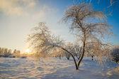 Stromy pokryté jinovatka proti modré obloze — Stock fotografie