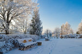 A beautiful city park with trees covered with hoarfrost — 图库照片