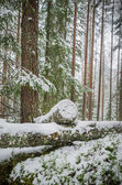 Sawn timber in the snowy winter forest — Stock Photo