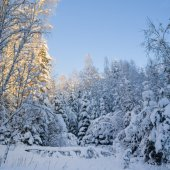 Trees covered with snow in winter forest. Viitna, Estonia. — Stock Photo