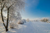 Trees covered with hoarfrost against the blue sky — Stock Photo