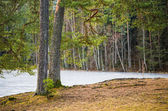 Spring landscape at wood lake — Stock Photo