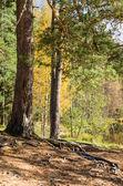 Paisagem de outono na floresta — Fotografia Stock