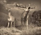 野生動物のシーン — ストック写真