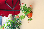 Pot of flowers adorn the walls of the house — Stock Photo