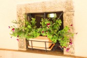 Pot of flowers in a niche walls of the house — Stock Photo