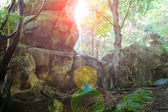 Rock in the sunlight in a summer wood thicket — Stock Photo