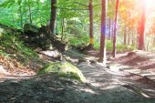 The sun's rays in a summer wood thicket — Stock Photo
