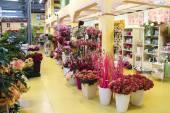 Ornamental plants in the garden center Mondoverde. Taneto, Italy — Stock Photo