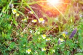 Wild flowers on a spring green meadow — Стоковое фото