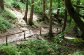 The path in the Carpathian Forest Reserve — Stock Photo