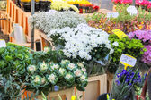 Flowers for sale at a Dutch flower market, Netherlands — Stock Photo