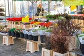 Seller packs flowers in the market  in the Dutch town Den Bosch. — Stock Photo