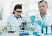 Team of scientists in a laboratory working on chemical testing — Stock Photo