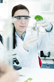 Study of genetic modified GMO plants in the laboratory. — Stock Photo