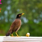 Bird on window — Stock Photo #60724529
