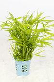 Fresh tarragon in a blue bucket — Stock Photo