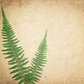 Ld vintage paper texture background with green dry fern leaves — Stock vektor