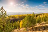 Pine trees in the forest in the mountains. Autumn landscape — Stock Photo