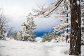 Snow covered trees in the mountains — Stock Photo