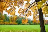 Autumn landscape. Fall scene.  — Stock Photo