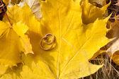Wedding gold rings  — Stock Photo